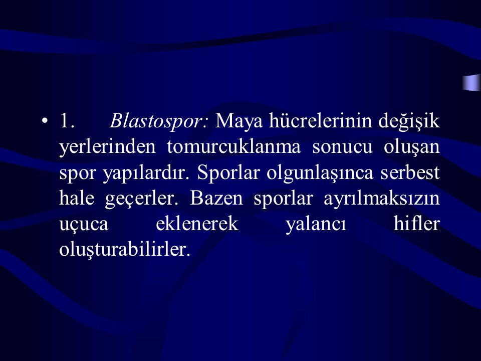 1. Blastospor: Maya hücrelerinin değişik yerlerinden tomurcuklanma sonucu oluşan spor yapılardır.