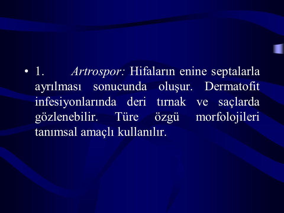 1. Artrospor: Hifaların enine septalarla ayrılması sonucunda oluşur