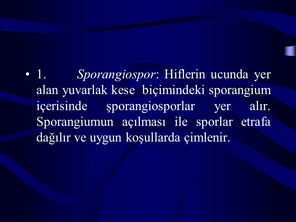 1. Sporangiospor: Hiflerin ucunda yer alan yuvarlak kese biçimindeki sporangium içerisinde şporangiosporlar yer alır.