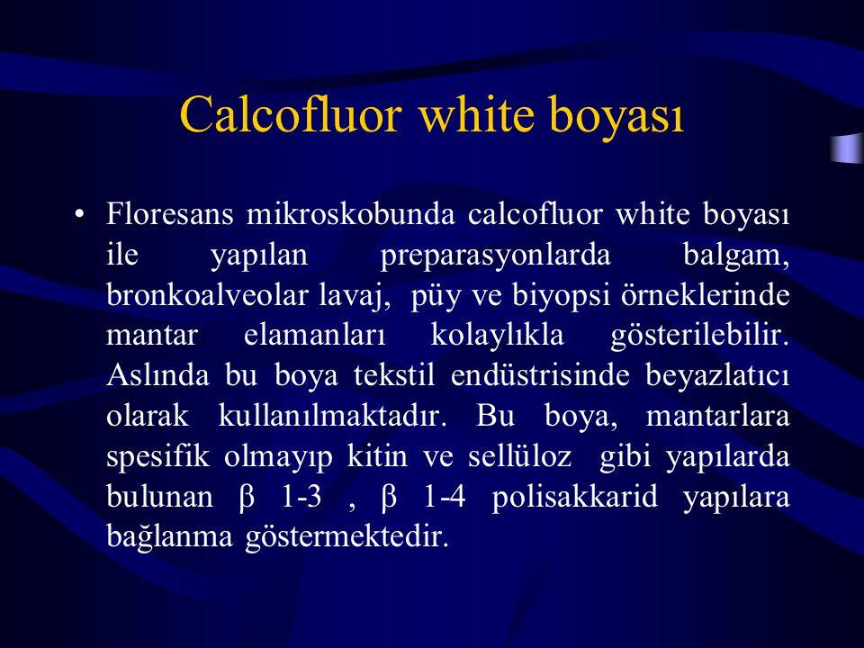 Calcofluor white boyası