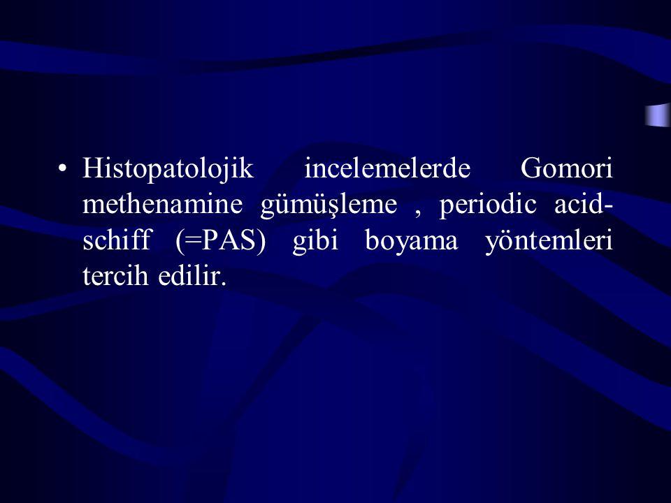 Histopatolojik incelemelerde Gomori methenamine gümüşleme , periodic acid-schiff (=PAS) gibi boyama yöntemleri tercih edilir.
