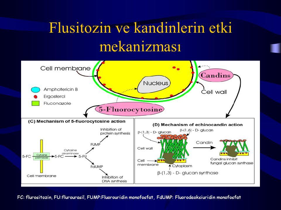 Flusitozin ve kandinlerin etki mekanizması