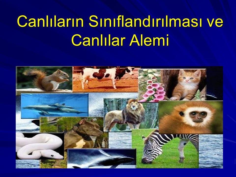 Canlıların Sınıflandırılması ve Canlılar Alemi