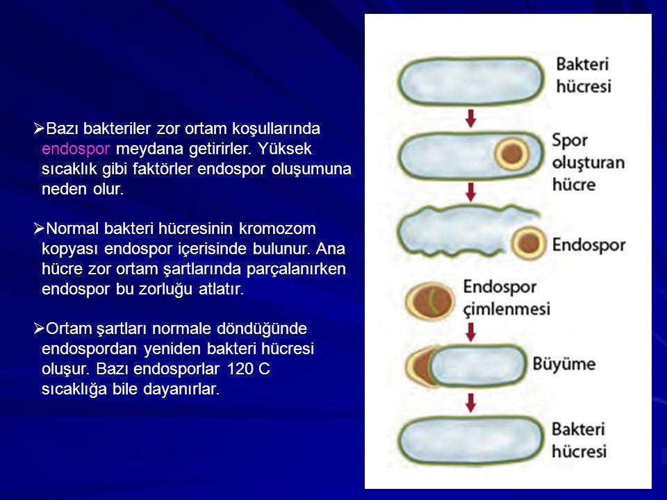 Bazı bakteriler zor ortam koşullarında