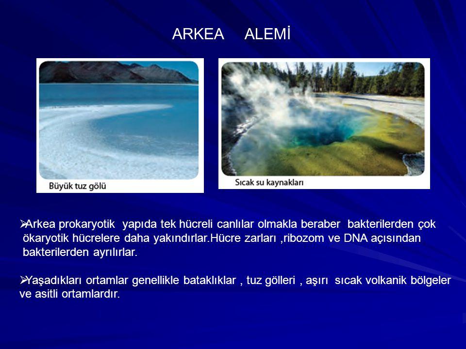 ARKEA ALEMİ Arkea prokaryotik yapıda tek hücreli canlılar olmakla beraber bakterilerden çok.