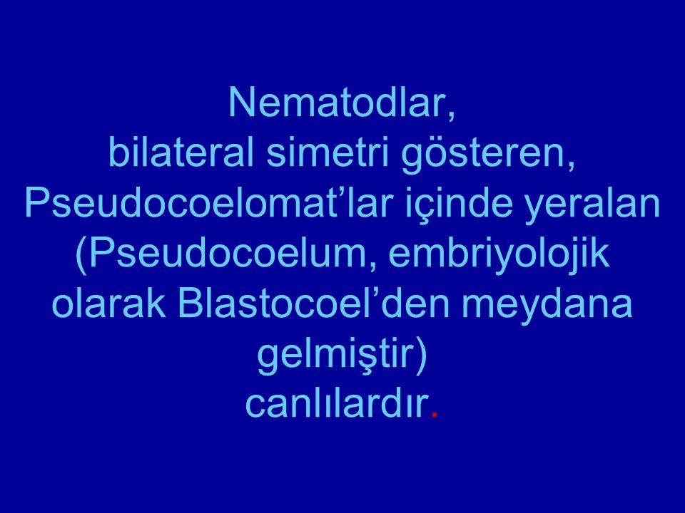 Nematodlar, bilateral simetri gösteren, Pseudocoelomat'lar içinde yeralan (Pseudocoelum, embriyolojik olarak Blastocoel'den meydana gelmiştir) canlılardır.