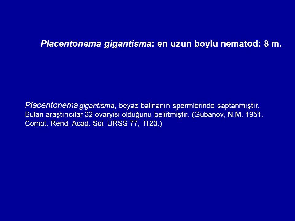 Placentonema gigantisma: en uzun boylu nematod: 8 m.