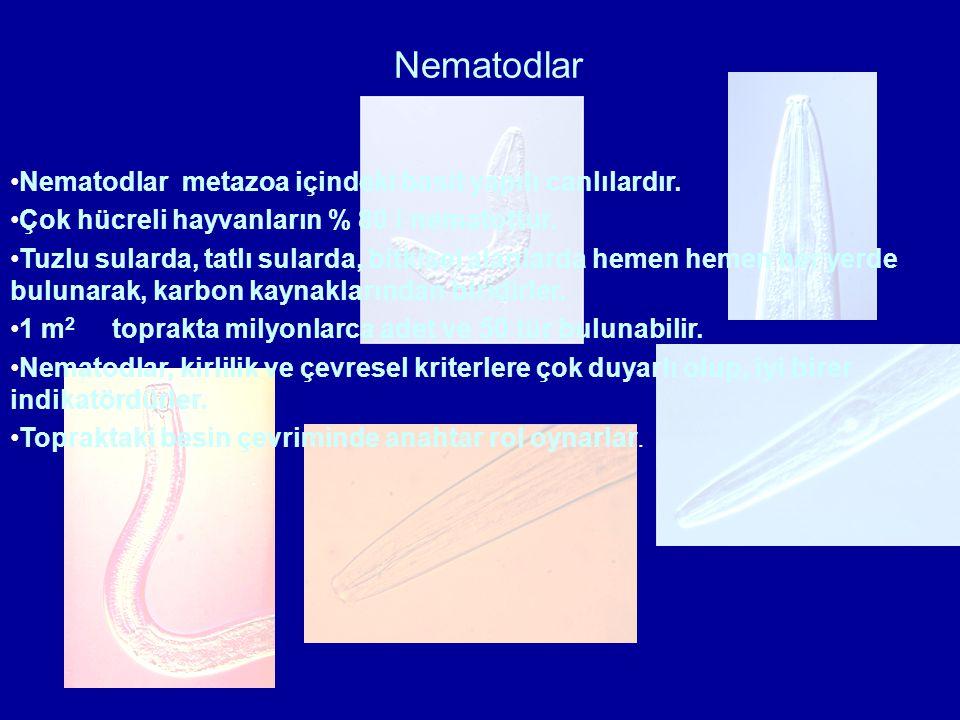 Nematodlar Nematodlar metazoa içindeki basit yapılı canlılardır.