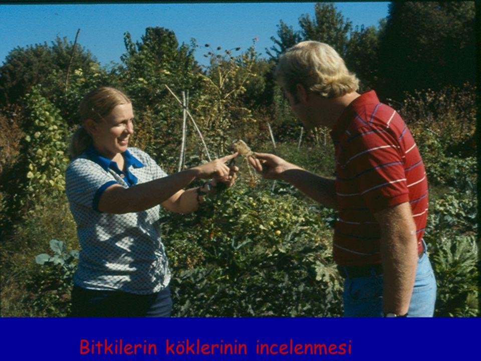 Bitkilerin köklerinin incelenmesi