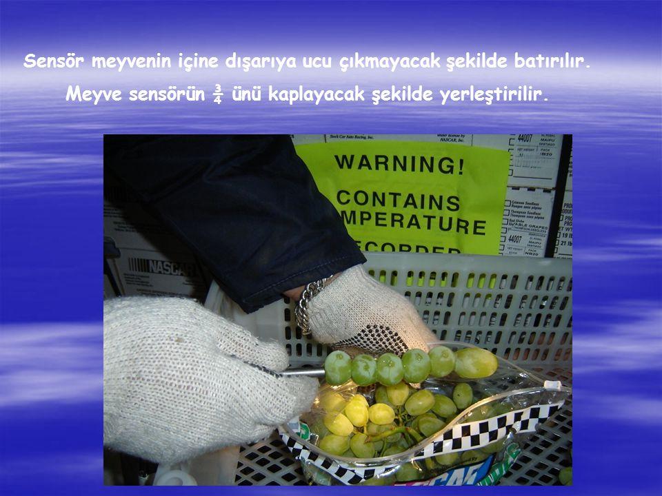 Sensör meyvenin içine dışarıya ucu çıkmayacak şekilde batırılır.