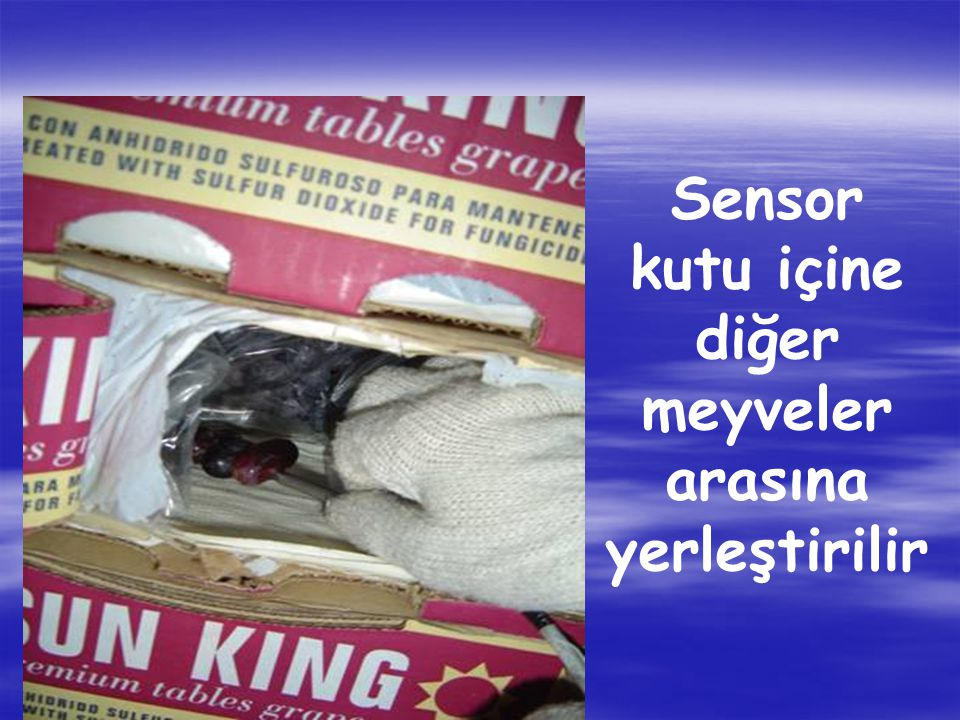 Sensor kutu içine diğer meyveler arasına yerleştirilir