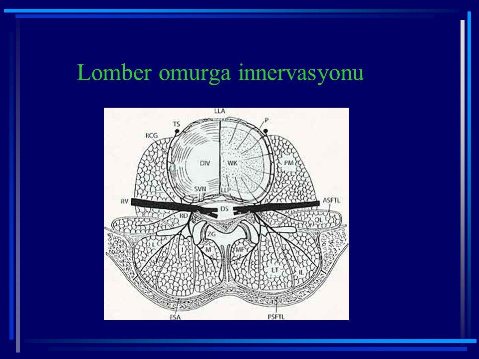 Lomber omurga innervasyonu