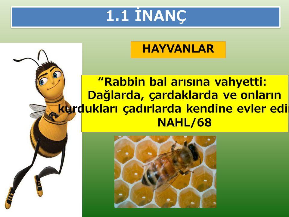1.1 İNANÇ HAYVANLAR Rabbin bal arısına vahyetti: