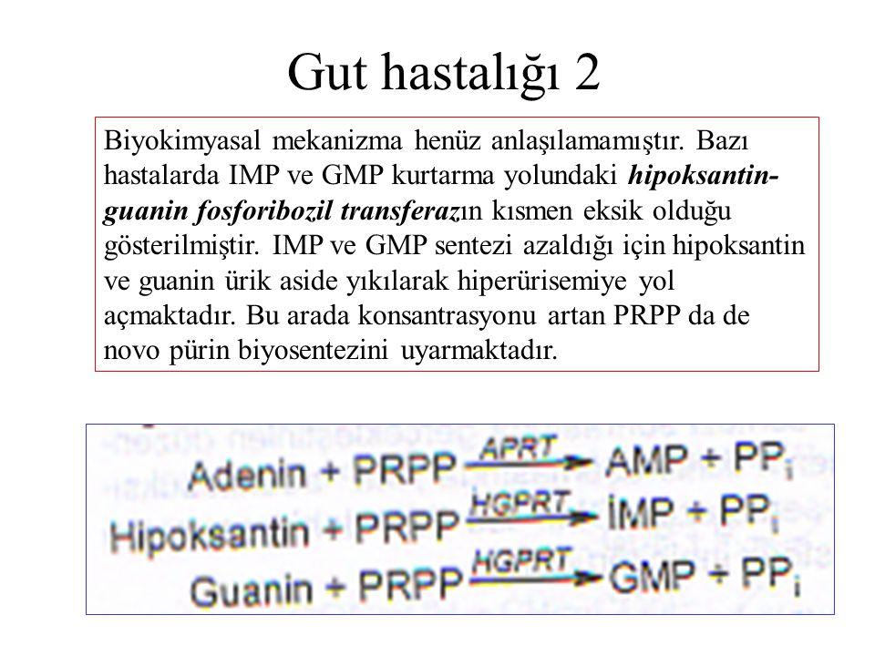 Gut hastalığı 2