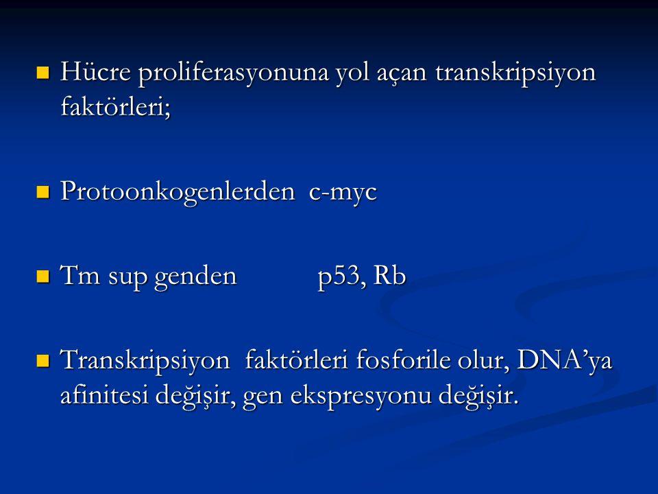 Hücre proliferasyonuna yol açan transkripsiyon faktörleri;