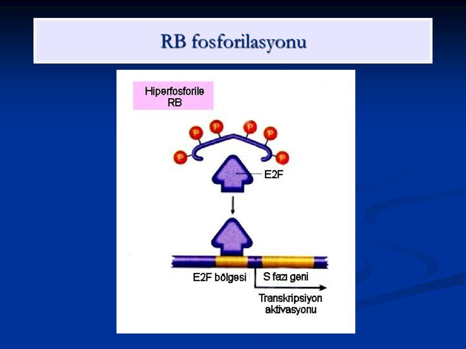 RB fosforilasyonu