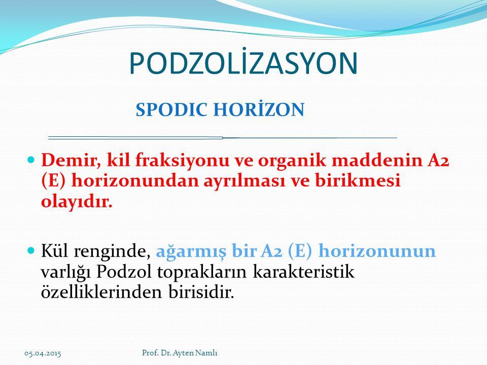 PODZOLİZASYON SPODIC HORİZON