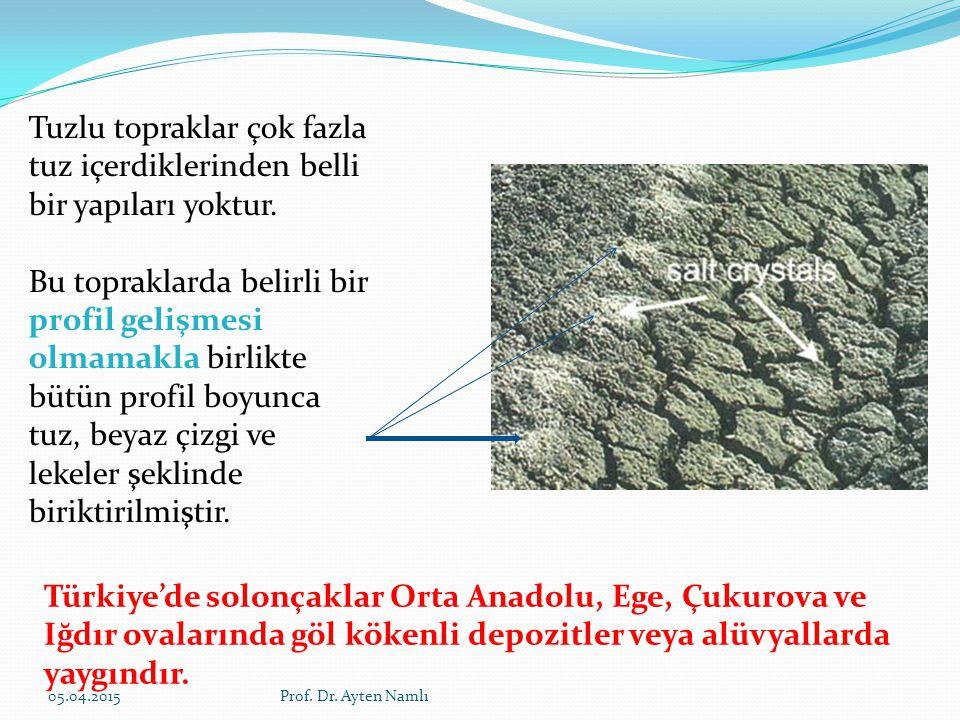 Tuzlu topraklar çok fazla tuz içerdiklerinden belli bir yapıları yoktur.