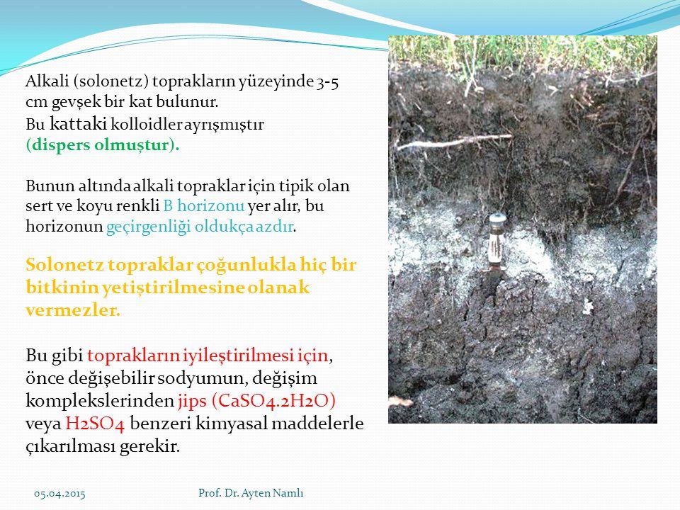 Alkali (solonetz) toprakların yüzeyinde 3-5 cm gevşek bir kat bulunur.