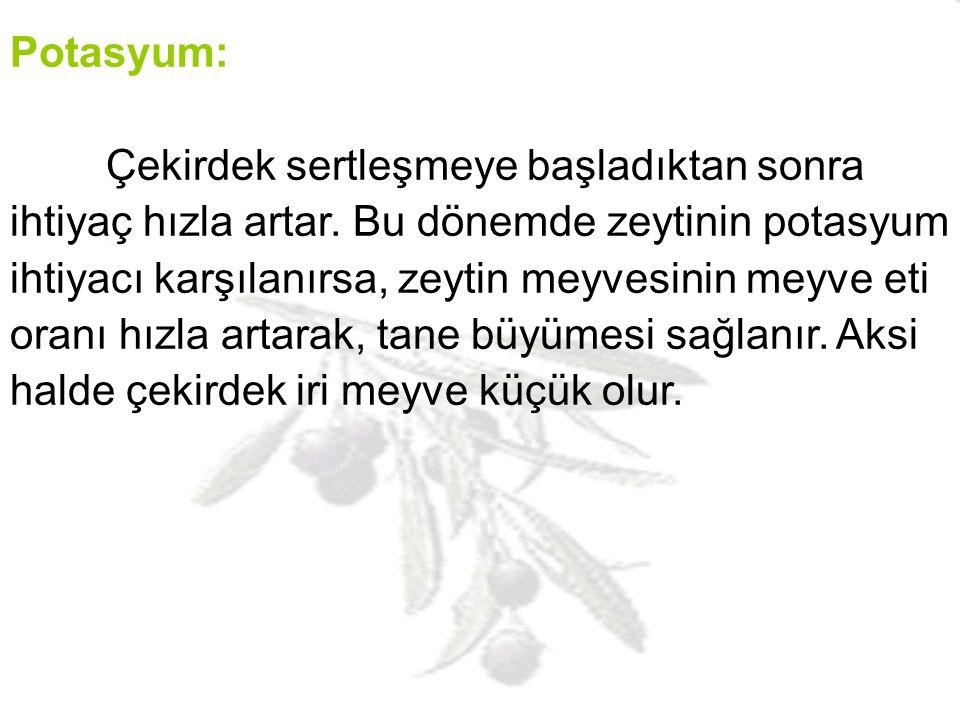 Potasyum: