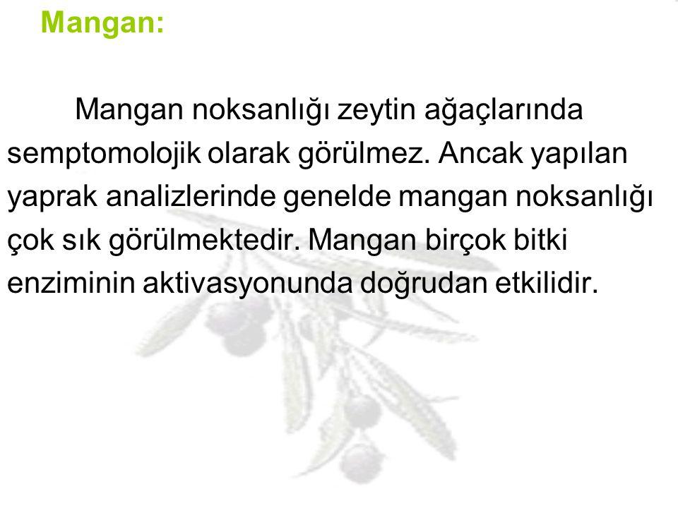 Mangan: Mangan noksanlığı zeytin ağaçlarında. semptomolojik olarak görülmez. Ancak yapılan. yaprak analizlerinde genelde mangan noksanlığı.