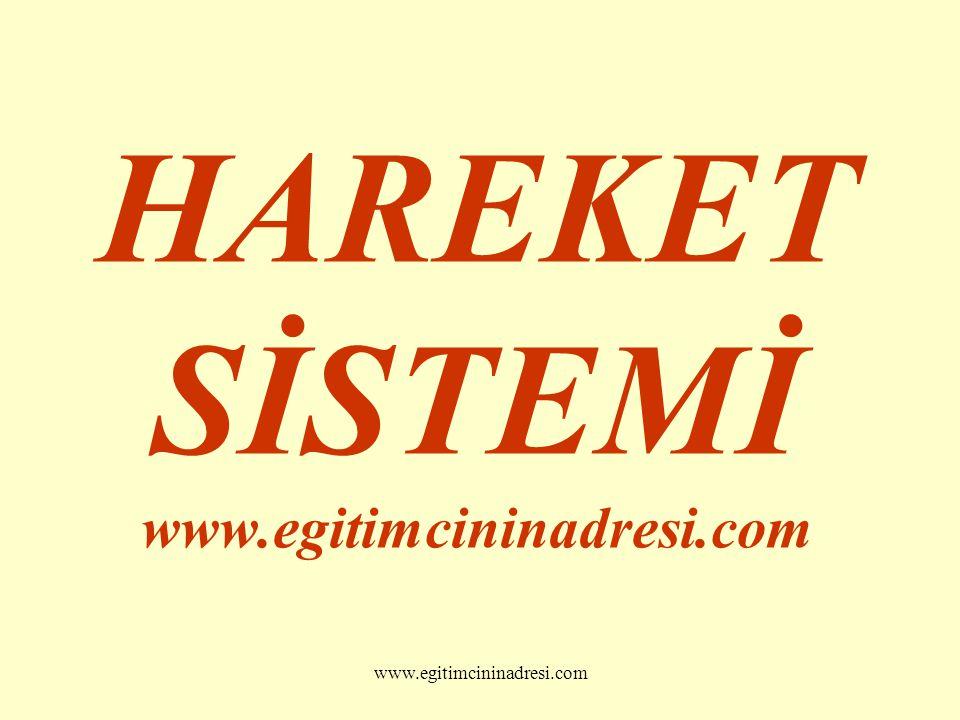 HAREKET SİSTEMİ www.egitimcininadresi.com