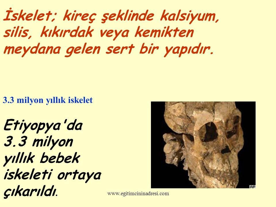 yıllık bebek iskeleti ortaya çıkarıldı.