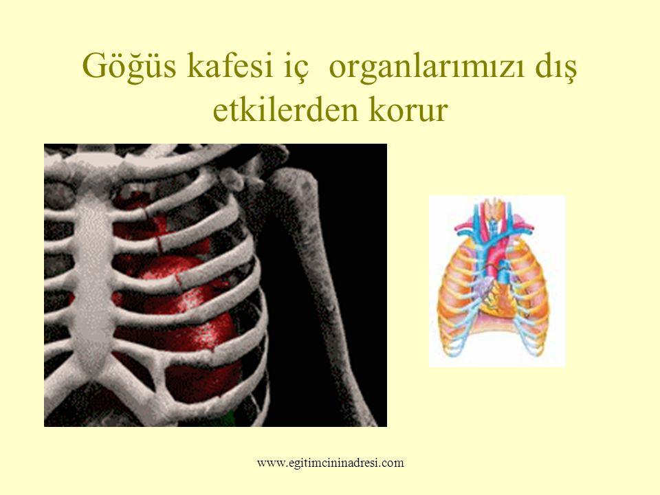 Göğüs kafesi iç organlarımızı dış etkilerden korur