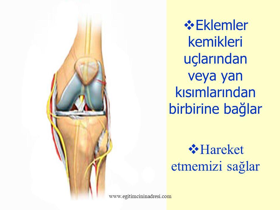 Eklemler kemikleri uçlarından veya yan kısımlarından birbirine bağlar