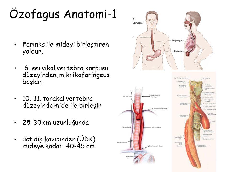 Özofagus Anatomi-1 Farinks ile mideyi birleştiren yoldur,