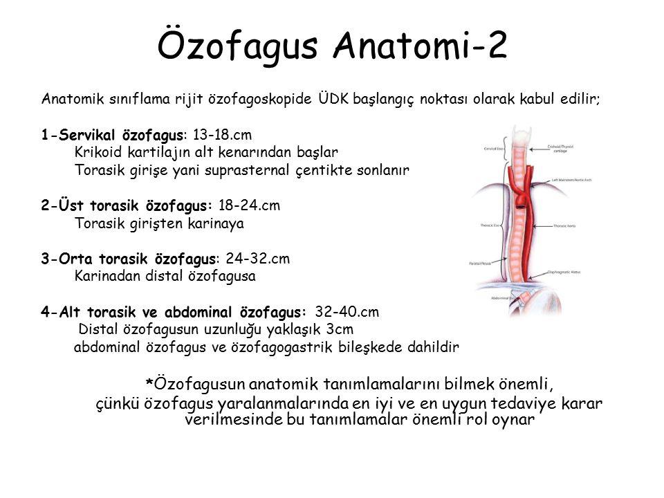 *Özofagusun anatomik tanımlamalarını bilmek önemli,