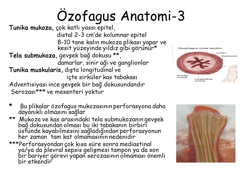 Özofagus Anatomi-3 Tunika mukoza, çok katlı yassı epitel,