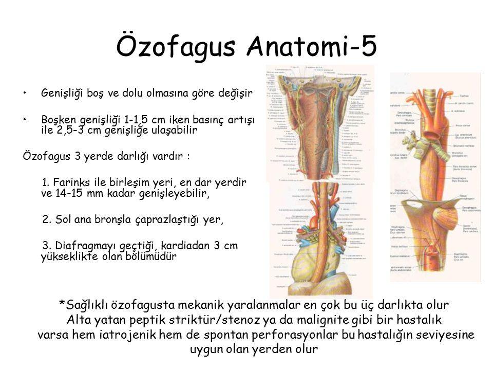 Özofagus Anatomi-5 Genişliği boş ve dolu olmasına göre değişir. Boşken genişliği 1-1,5 cm iken basınç artışı ile 2,5-3 cm genişliğe ulaşabilir.