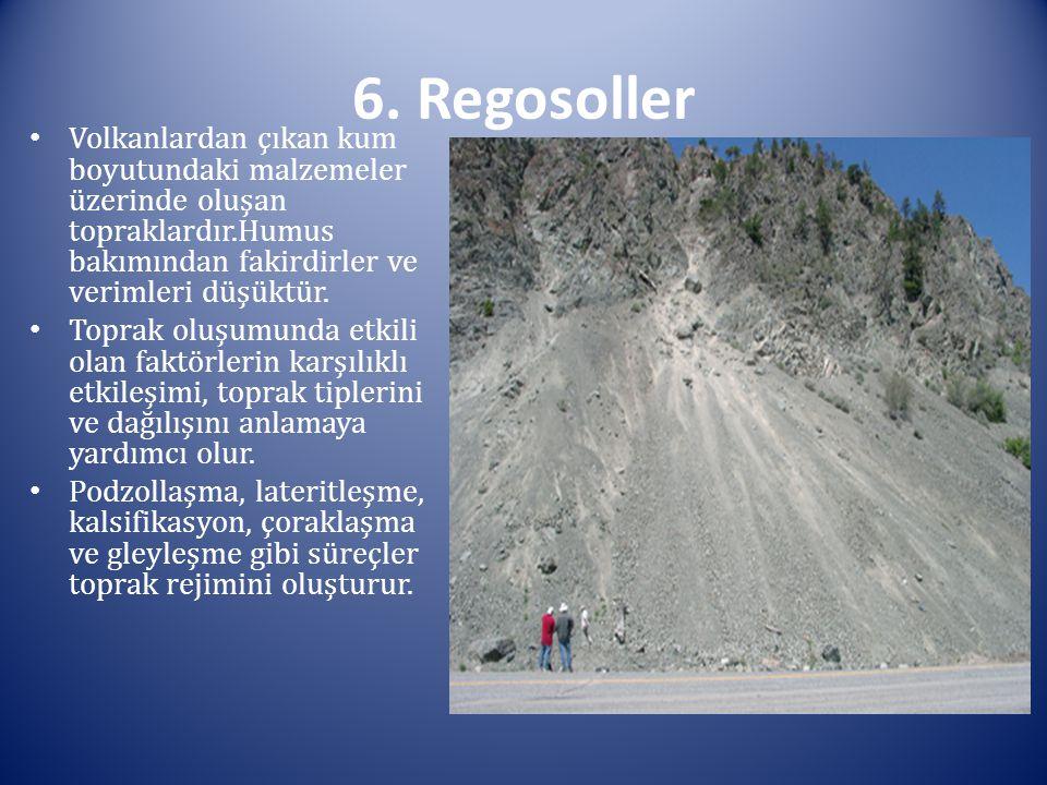 6. Regosoller Volkanlardan çıkan kum boyutundaki malzemeler üzerinde oluşan topraklardır.Humus bakımından fakirdirler ve verimleri düşüktür.