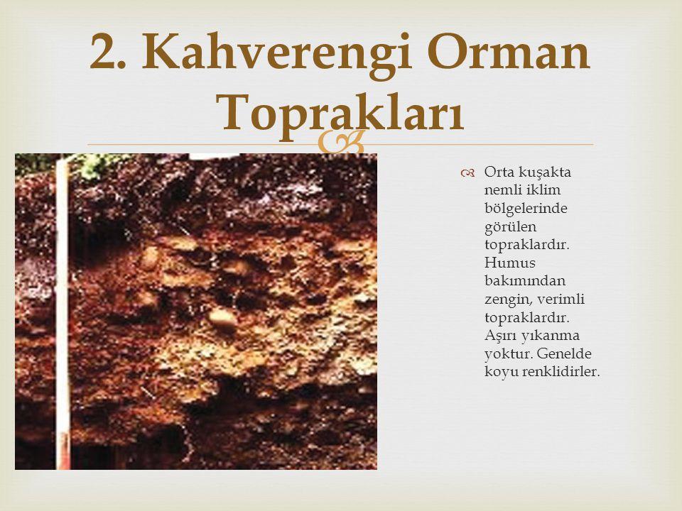 2. Kahverengi Orman Toprakları