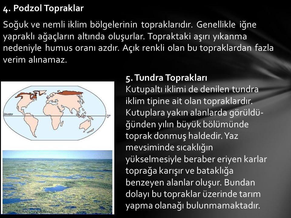 4. Podzol Topraklar Soğuk ve nemli iklim bölgelerinin topraklarıdır