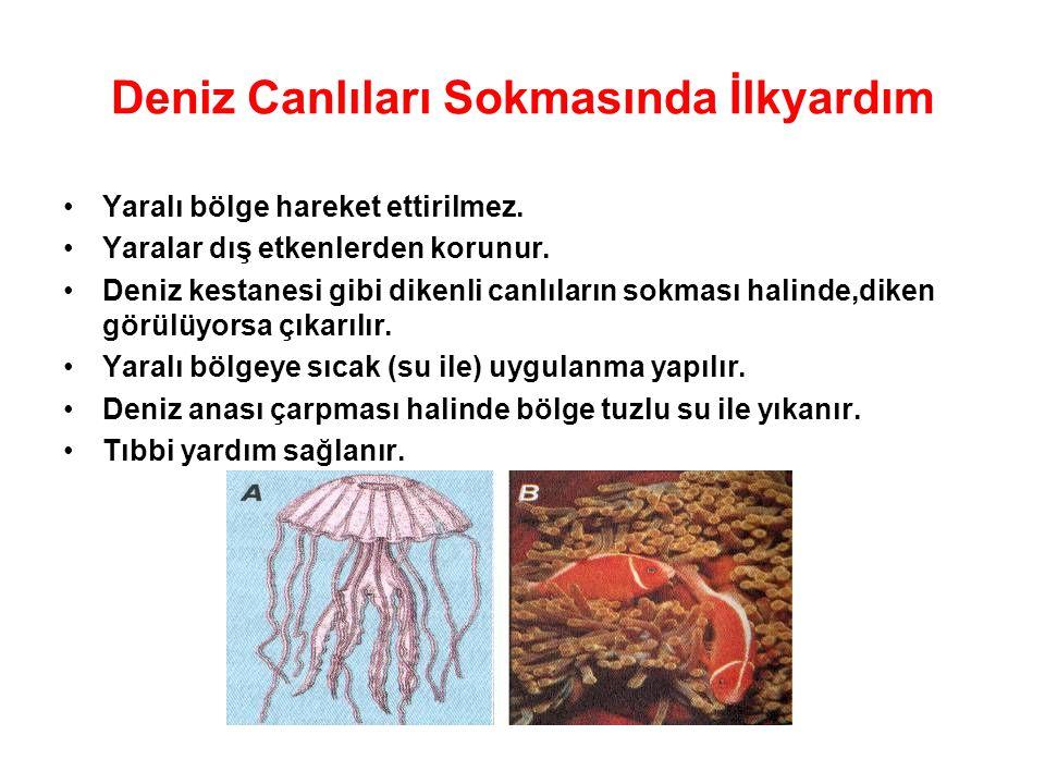 Deniz Canlıları Sokmasında İlkyardım