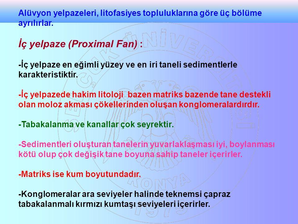 İç yelpaze (Proximal Fan) :
