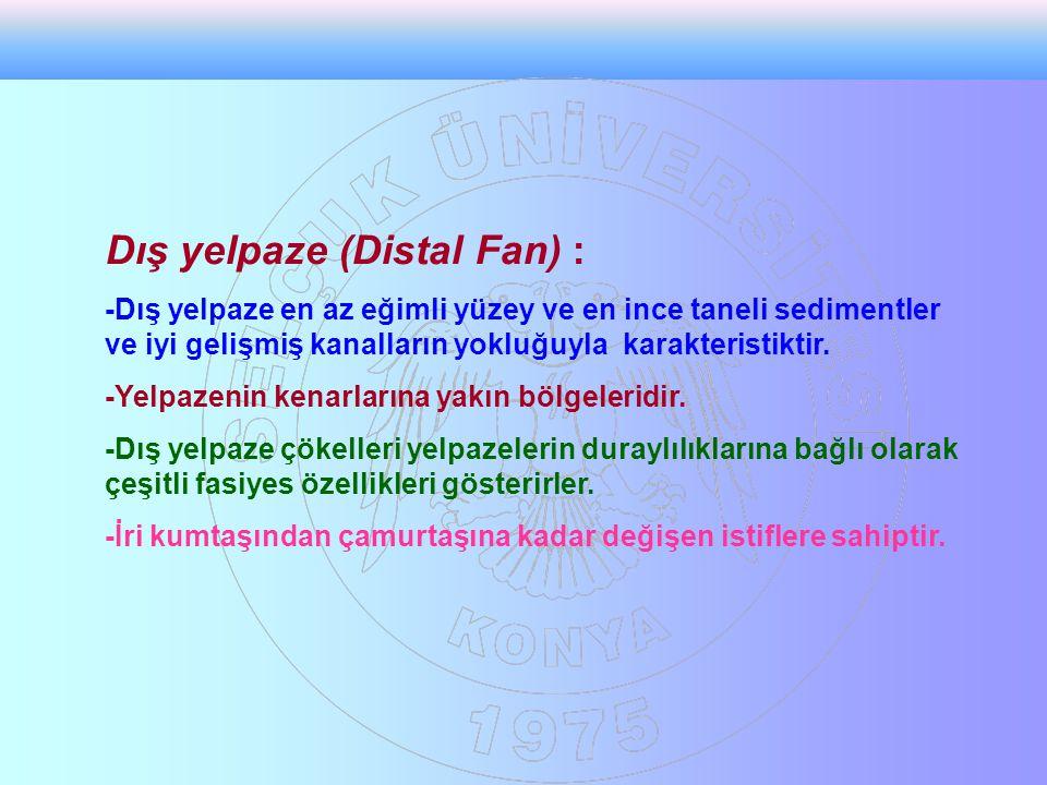 Dış yelpaze (Distal Fan) :