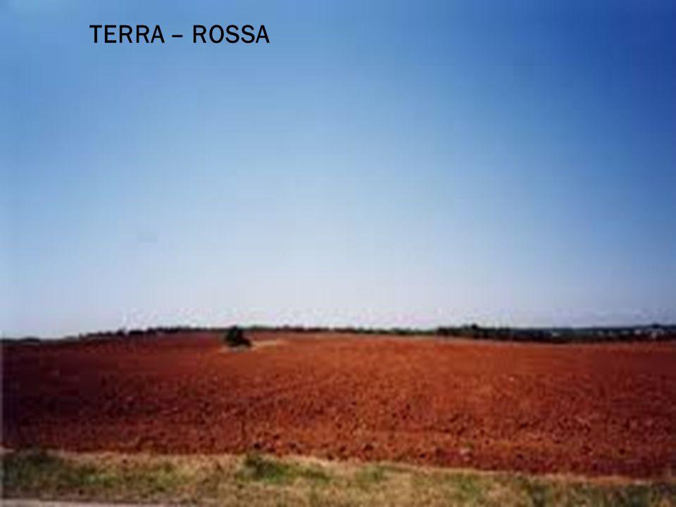 TERRA – ROSSA