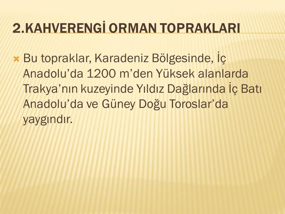 2.KAHVERENGİ ORMAN TOPRAKLARI