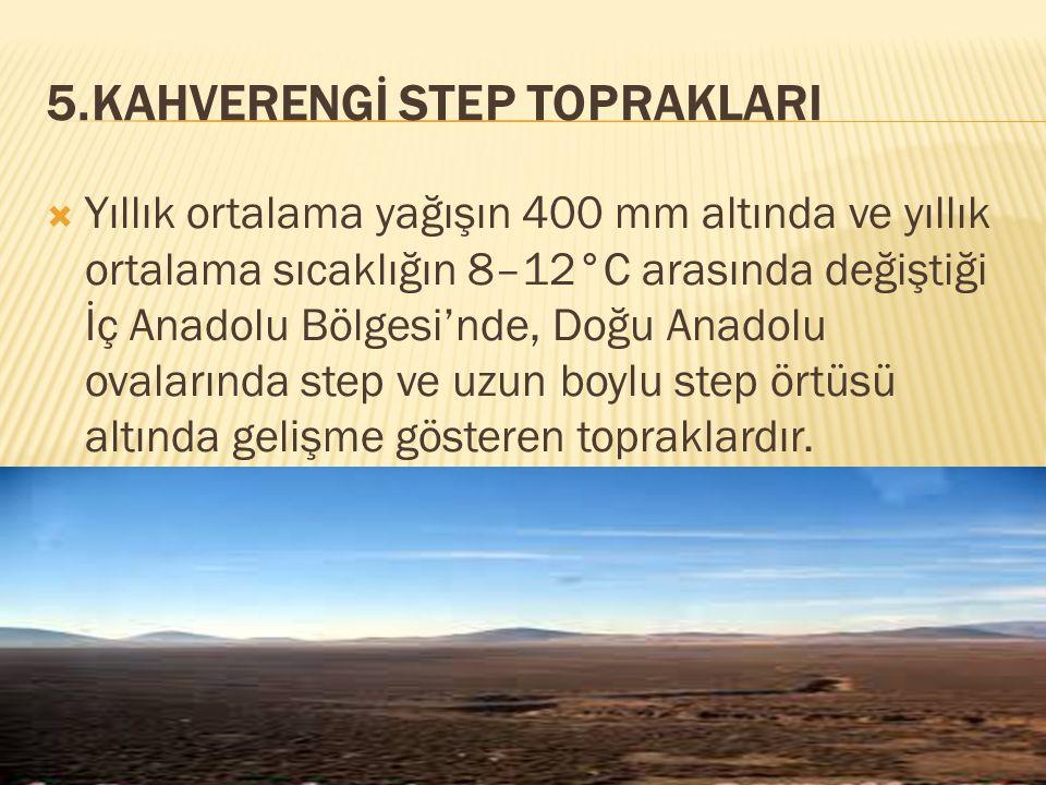 5.KAHVERENGİ STEP TOPRAKLARI