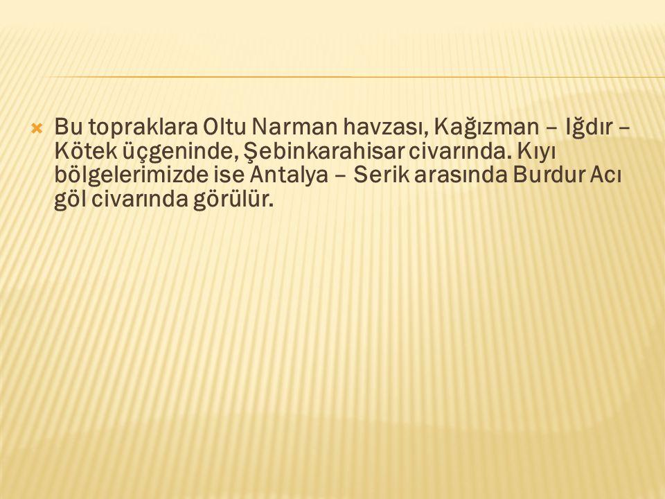 Bu topraklara Oltu Narman havzası, Kağızman – Iğdır – Kötek üçgeninde, Şebinkarahisar civarında.
