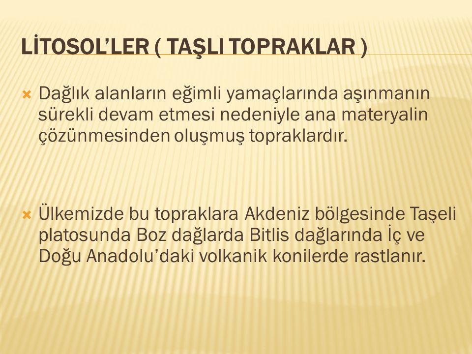 LİTOSOL'LER ( TAŞLI TOPRAKLAR )