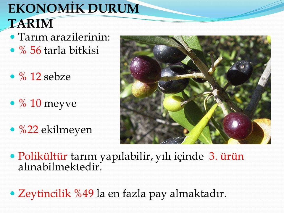 EKONOMİK DURUM TARIM Tarım arazilerinin: % 56 tarla bitkisi % 12 sebze
