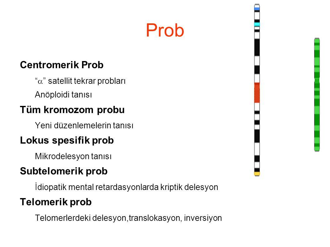 Prob Centromerik Prob Tüm kromozom probu Lokus spesifik prob