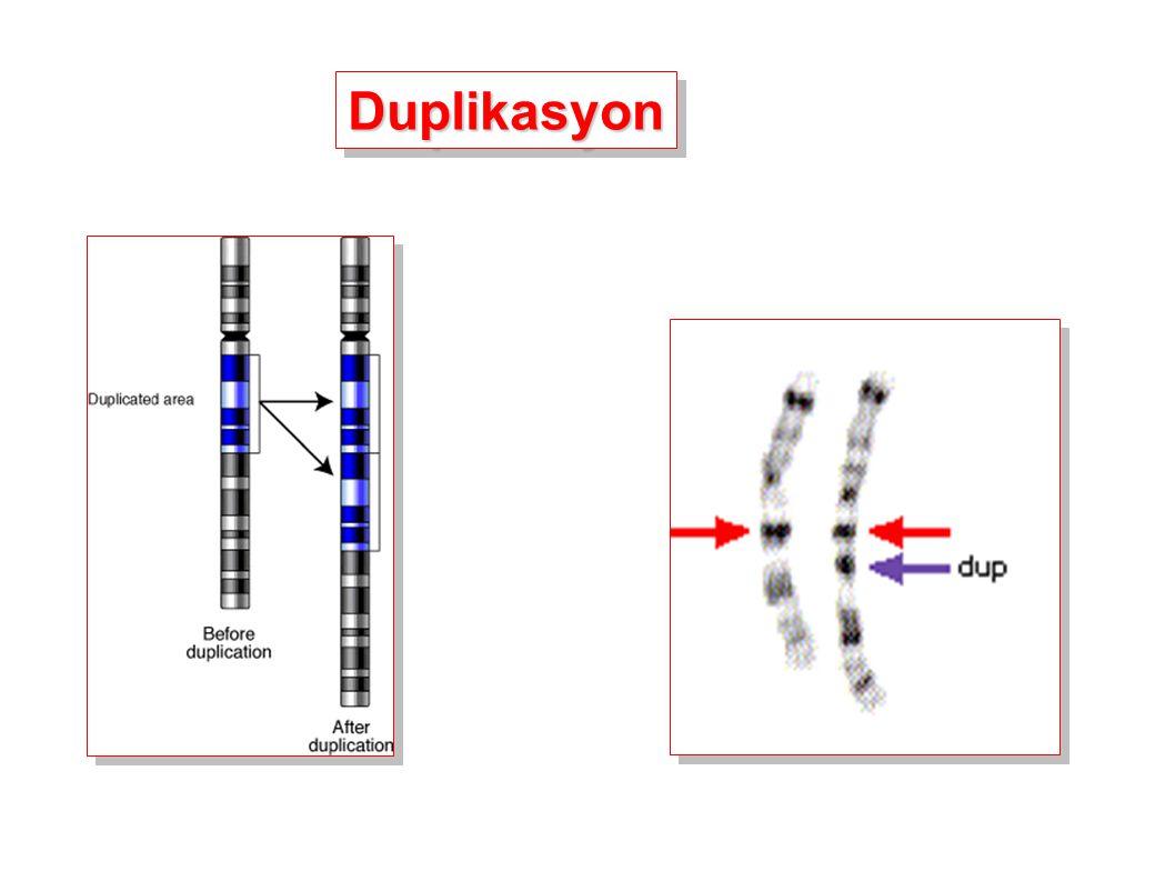 Duplikasyon