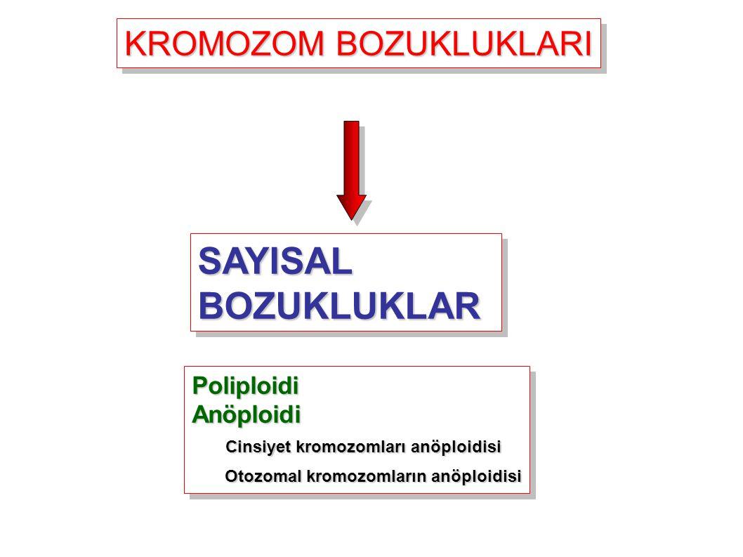 SAYISAL BOZUKLUKLAR KROMOZOM BOZUKLUKLARI Poliploidi Anöploidi