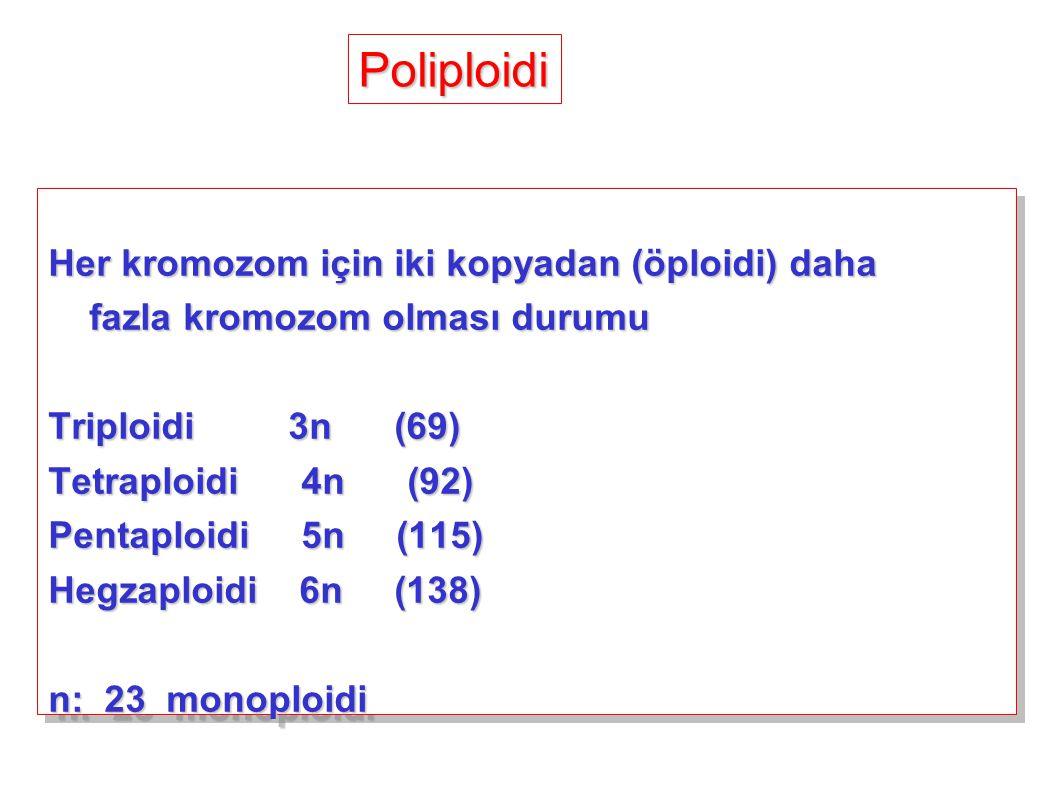 Poliploidi Her kromozom için iki kopyadan (öploidi) daha