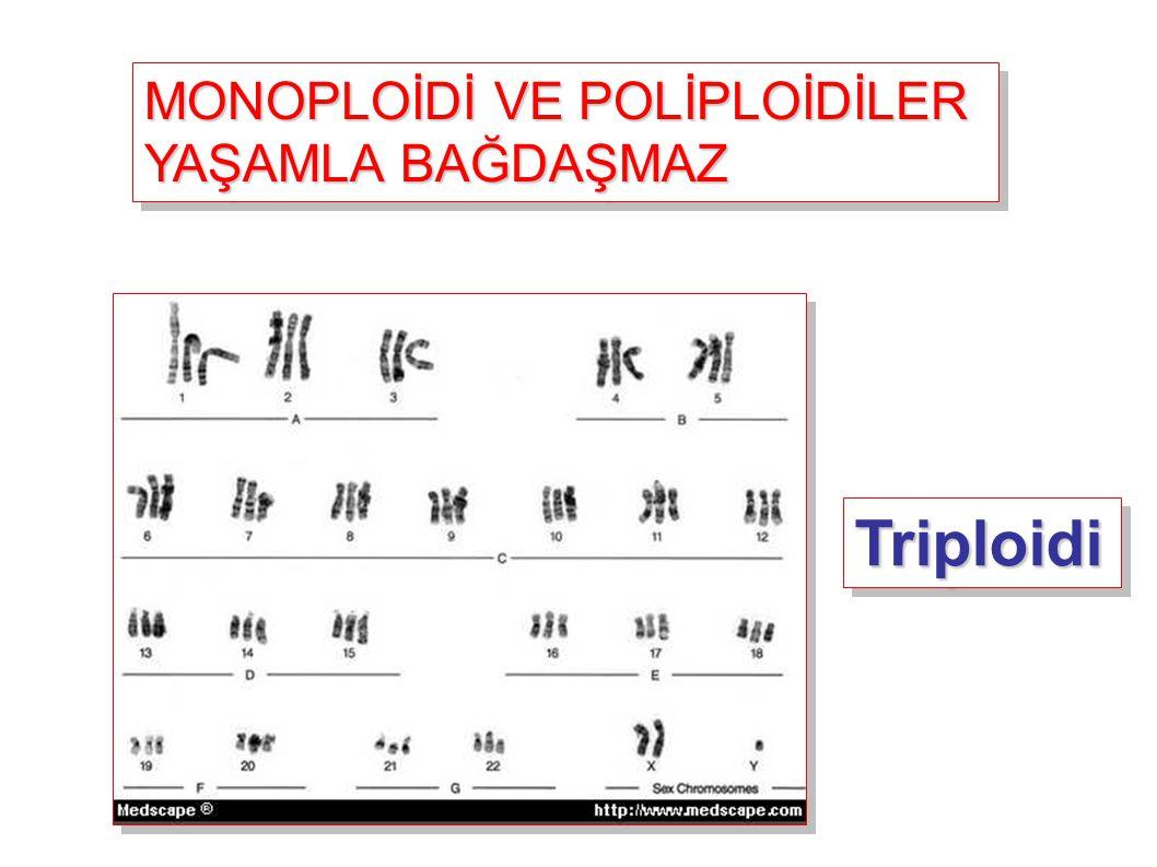 MONOPLOİDİ VE POLİPLOİDİLER